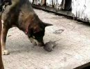犬がネズミを瞬殺。