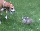 犬と地リスが闘う