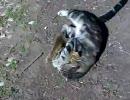 猫が愛しげにリスを抱く。