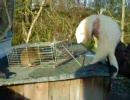 フェレットがネズミを屠る。【ノロイ】