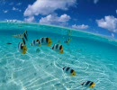 水面や水中の画像が怖い(エコノミー回避版)