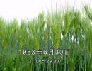 谷山浩子のオールナイトニッポン 1983年06