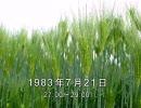 谷山浩子のオールナイトニッポン 1983年07月21日