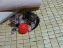 淀川河川敷で保護した子猫