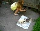 車に轢かれて死んだウサギを食べる子猫