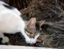猫、鳥食ってたら水かけられた