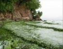 中国のすばらしい環境① お茶が流れる川