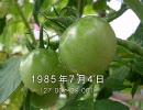 谷山浩子のオールナイトニッポン 1985年07月04日