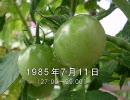 谷山浩子のオールナイトニッポン 1985年07月11日