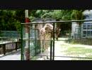 福岡市動植物園のキリン
