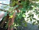 ネムネムの木