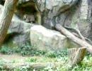 ユキヒョウの赤ちゃん ユキチ - 2 -