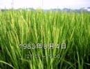 谷山浩子のオールナイトニッポン 1983年08月04日