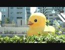 水都大阪2009 アヒルプロジェクト2009