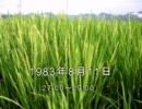 谷山浩子のオールナイトニッポン 1983年08月11日