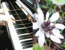 【東方ニコ童祭】東方雪夜物語 Piano Version 弾いてみた。