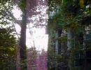 【廃墟】摩耶観光ホテル探検動画【FRAGILE】