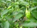 谷山浩子のオールナイトニッポン 1983年08月25日