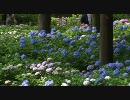 京都の動画集まとめ・その8