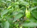谷山浩子のオールナイトニッポン 1983年09月29日