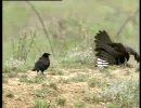 誘拐する鳥