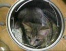 猫がパスタ鍋に篭城しました