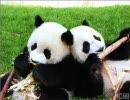 【誰得】俺しか得しない夜姫と熊猫メドレー【作業用BGM】