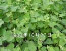 谷山浩子のオールナイトニッポン 1983年10月27日