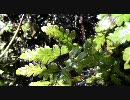 【FULLHD】水琴窟の音【1920x1080】