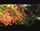 【FULLHD】紅葉・雪の京都【1920x1080】