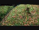 【FULL HD】紅葉の写真集2【1920x1080】