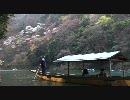 【FULL HD】桜動画【1920x1080】