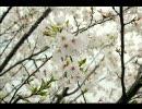 【DTM】春庭【オリジナル曲】