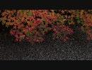 【HD】京都の竹林を走ってみた+予告動画【1280x720】
