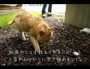 北海道ツーリング'09 with MINI その22
