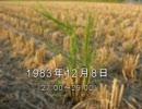 谷山浩子のオールナイトニッポン 1983年12月08日