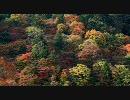 【HD】2009年紅葉の京都・滋賀に行ってきたその(4)【善峯寺】