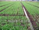 谷山浩子のオールナイトニッポン 1984年01月26日