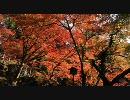 【HD】2009年紅葉の京都・滋賀に行ってきたその(8)【石山寺その1】
