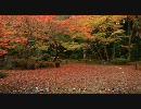 【HD】2009年紅葉の京都・滋賀に行ってきたその(9)【石山寺その2】