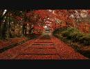 【HD】2009年紅葉の京都・滋賀に行ってきたその(12)【毘沙門堂~高桐院】
