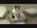 【HD】2009年紅葉の京都・滋賀に行ってきたその(14) 【詩仙堂~】