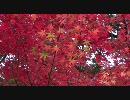 【FULLHD】2009年紅葉の京都1【1920x1080】