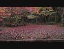 【FULLHD】2009年紅葉の石山寺【1920x1080】