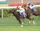 【競馬】 2005 香港マイル ハットトリック 【ちょっと盛り】
