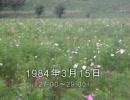 谷山浩子のオールナイトニッポン 1984年03月15日