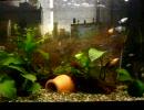 とある田舎の水族館(アクアリウム)・Ver 1.1