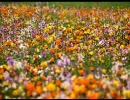 PIERROT  Upper flower  感覚のスケールがアップしたので歌ってみた。