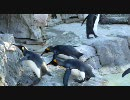 [上野動物園]ペンギンの食事タイムでの出来事