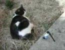 【サスケェ】チャクラ宙返りをうちの猫に与えてみた